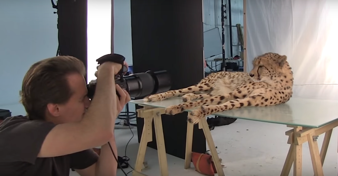 Fearless Photographer Brings Wild Animals Into His Studio
