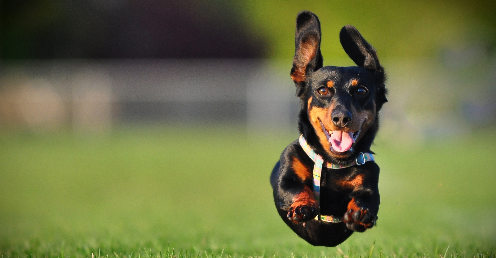 6 Essential Tips For Great Action Shots Of Dogs
