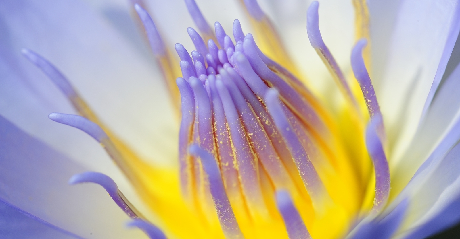 Use This Common Household Item To Significantly Improve Your Macro Images
