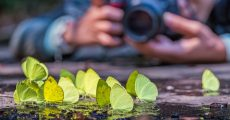 The Secret Source Of Prize-Worthy Nature Photography Ideas