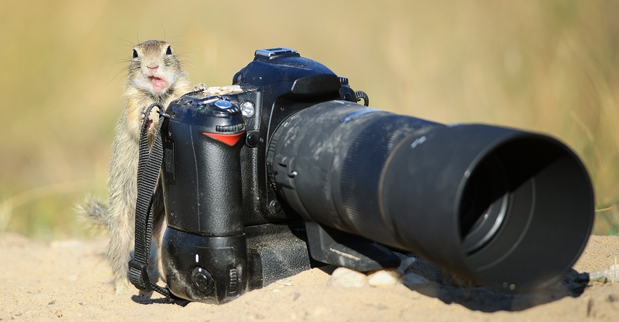 Funny And Dangerous PHOTOGRAPHER FAIL Compilation