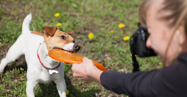 These Tips And Tricks Will Take Your Pet Photography To The Next Level